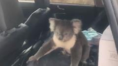 コアラさん 車の中が気に入ってしまう