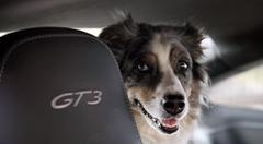 ポルシェ 991 GT3 の車内に残されたワンちゃんを救え!