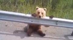 車好き子熊さん 通り過ぎる車をぼーっと眺めるの巻