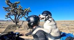 これは羨ましい!ハスキー犬と一緒にバイクでアメリカを旅する男性