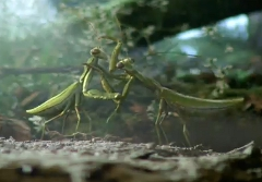 次期ニュービートルを虫に例えたフォルクスワーゲンの面白CM動画