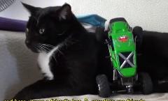 ラジコンカーのうにうに攻撃にも動じない猫の動画