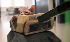 なんだこれ?戦車に乗った猫が大暴れしちゃう面白動画