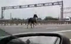 高速道路上を本物の馬がパカランパカラン走っちゃう面白動画