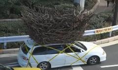巨大な鳥の巣のようなものを屋根に積んで走る動画