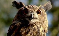 動物たちのびっくり顔が超かわいいヒュンダイ ソナタ ハイブリッドの面白CM動画