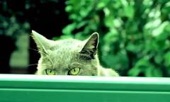 なんだこれwww車泥棒を撃退しちゃうネコの動画