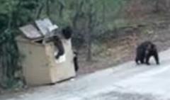 ゴミ箱に落ちた小熊を助け出せ!ほのぼの小熊救出大作戦動画