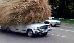 完全に積載量オーバー! 大量の干し草を積んで走る乗用車の動画