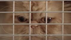 そこまでしなくてもwww カローラに乗りたくてしょうがない猫がかわいいトヨタの面白CM動画