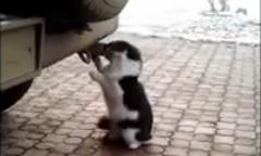 猫「排気ガスいいわ~」