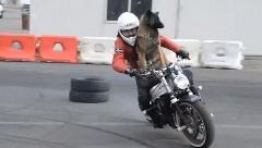 犬と一緒にバイクドリフトしちゃう動画