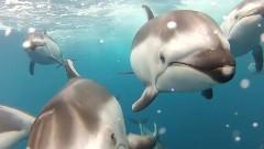 イルカになった気分を味わえちゃう動画
