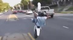 ノリノリで公道ウイリーしちゃう黒人スタントライダー