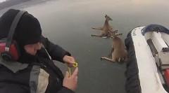 イイハナシダナー!氷湖で立ち往生している鹿を助けるホバークラフトの動画