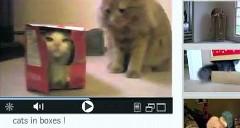 箱の中の猫よりジャガー