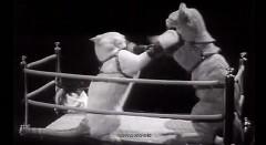 猫がボクシングしちゃう動画