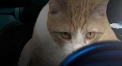 映画「ニード・フォー・スピード」の予告編を猫とラジコンカーでパロってみた動画