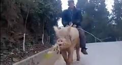 乗れねぇ豚はただの豚だ