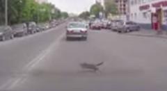 前の車から猫が落ちてきた!