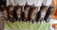 子猫7匹のシンクロがカワイすぎる動画