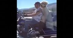 犬「タンデムサイコー!」