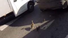 グッジョブライダー 鴨の親子を助けるの巻