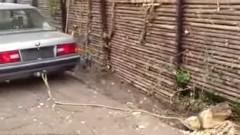 車で切り株をで引っ張って抜こうとしたらトホホな状態になっちゃった動画