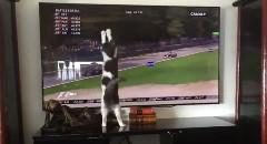 猫 F1に大興奮するの巻
