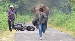 逃げろー!道で遭遇したゾウに追っかけられちゃうバイカーが超焦っちゃう動画