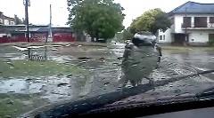 ワイパーの動きにも負けない鳥さん動画
