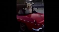 小さなオープンカーに大人2人と大きな犬を乗せる方法がわかる動画