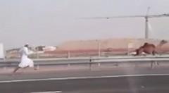 高速道路をラクダが爆走→人間も爆走wwww