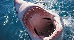 サメについて知っておくべき豆知識