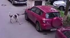 グルメ犬「トヨタ RAV4うめえwwww」