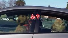 犬のドライバー「ここ押すとプーって鳴るwww」