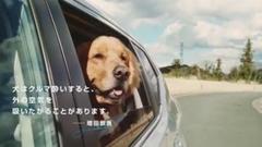 犬が車の窓から顔を出すのは楽しいからじゃないらしいよ!っていう動画