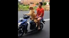 犬「俺のスクーターで送ってやるよ」 人間「あざーす」