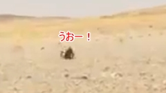 砂漠に住むトカゲ「日陰!日陰!日陰!」