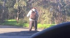 道路の真ん中でポケモンGOやってる奴が逆ギレしちゃう動画