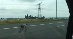 高速道路を時速100km/h で車と並んで飛行する鳩レーサー