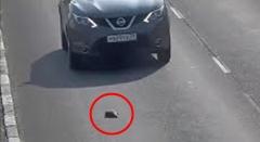 誰か助けてあげて!車だらけの道路上に落ちてしまった子猫動画