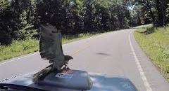 スバル WRX STI 鳥から亀を奪うの巻