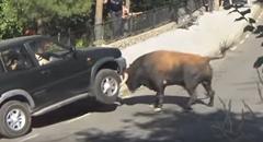 荒れ狂う猛牛がSUVを血祭りにあげちゃう動画