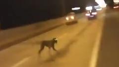 どこから出てきた?道路の真ん中に突然現れた犬