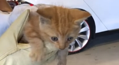 声はすれども姿は見えず テスラ モデルXに紛れ込んだ子猫を救え!