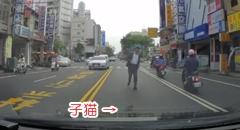 道路上に立ち往生している子猫を救う心優しきドライバー