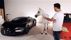 動物が選ぶ車はどっち? ブガッティ ヴェイロン vs シボレー スパーク