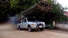 大量の竹を積んだトラックのトホホ動画