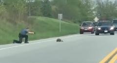 グラウンドホッグが道路に出現→警官「止まらないと撃つぞ!」→ホントに撃つ